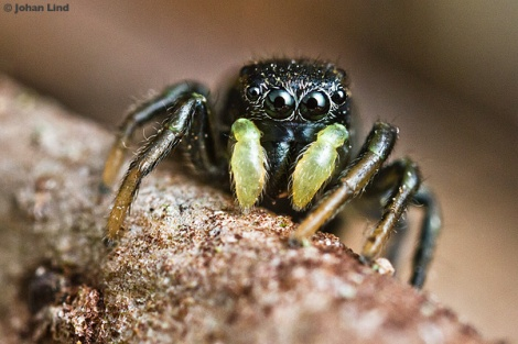 Spindeln som fullbordar trissen.