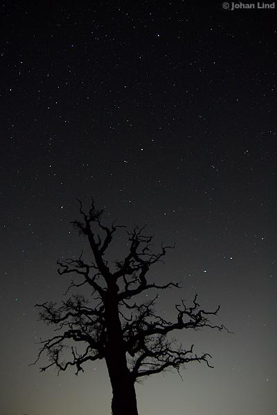 Ek med stjärnhimmel