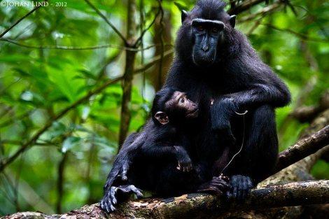 Mamma barn-apa