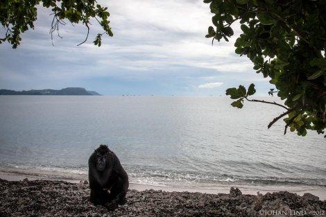 En ljuv makak