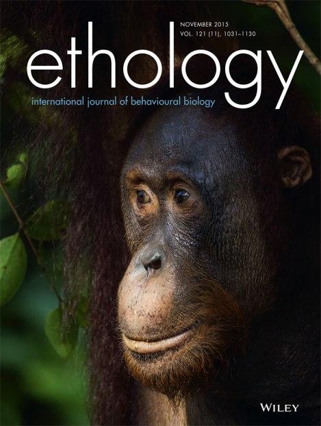 Orangutang på omslag